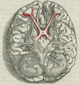 1543,Visalius'OpticChiasma (2)